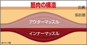 「アウターマッスル インナーマッスル」の画像検索結果